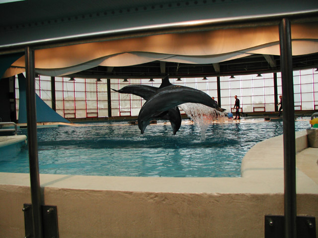 The Dolphin Show at the Aquarium
