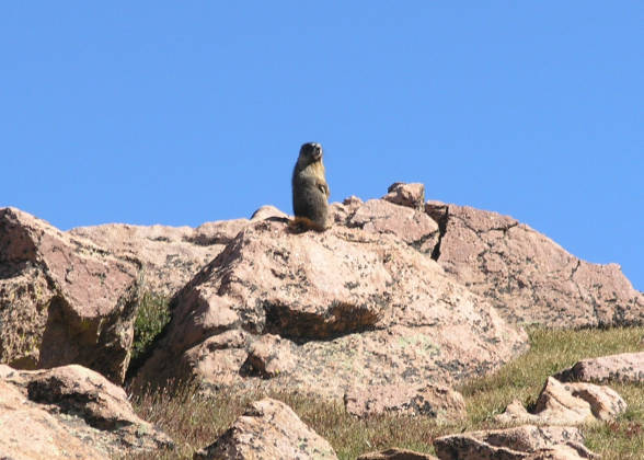 One of many marmot sightings