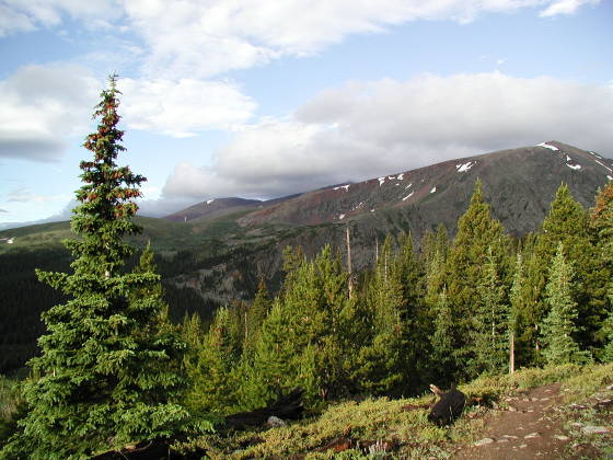 Looking southward towards Mt. Bross (on the left)