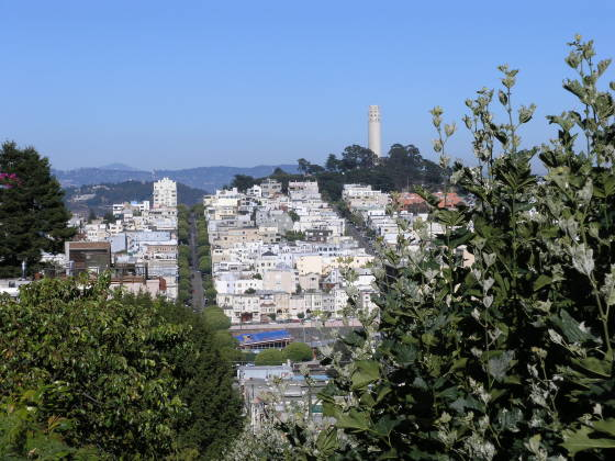 Telegraph Hill and Coit Tower