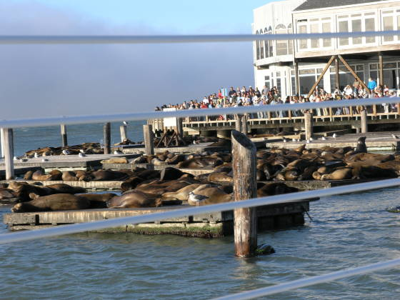 Seals, Sea Lions, and Tourists...oh my!