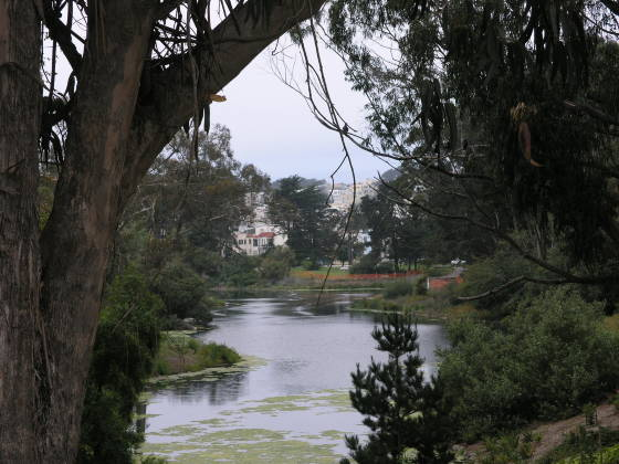 North Lake in Golden Gate Park