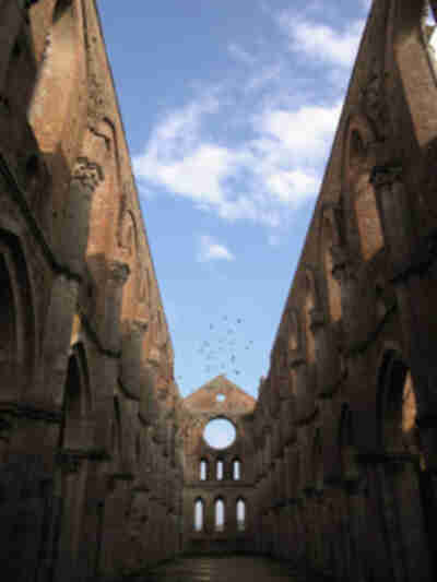 Birds flying over San Galgano