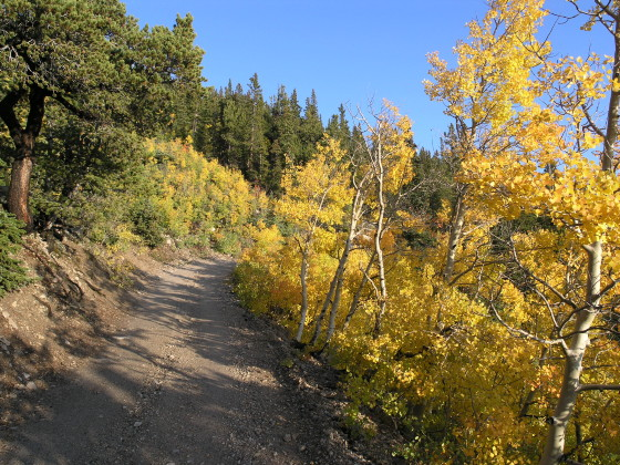 Aspens along the 4WD road/trail