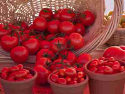 Cherry Creek Farmers Market