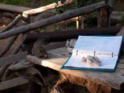A squirrel contemplates signing the log book