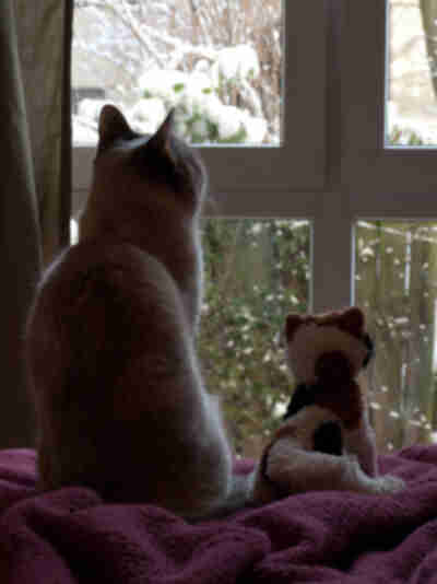 Ginger sits next to Wilma (the stuffed cat) looking at birds
