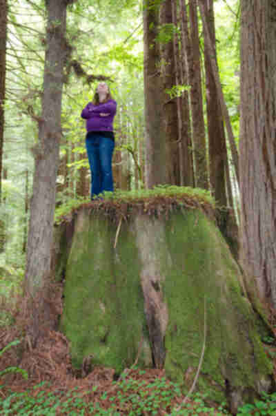Lisa and a redwood stump
