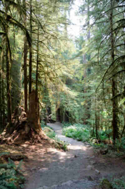Hiking to Sol Duc Falls in Olympic National Park