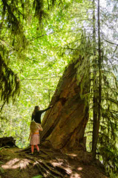 Cathedral Grove near Port Alberni, BC