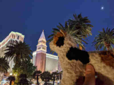 Wilma goes to the Venetian